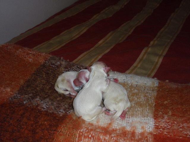 babypuppies2