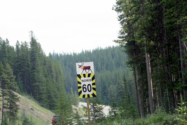 Elk Warning Sign 엘크 경고 표지