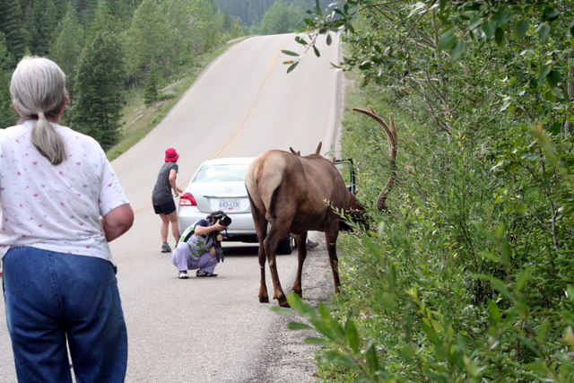 Elk 엘크