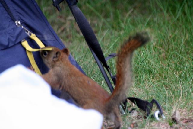 Squirrel 다람쥐