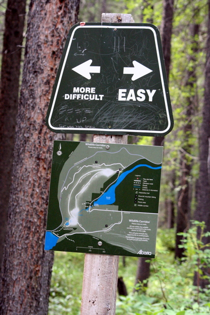 Which Way? 어느 길로?