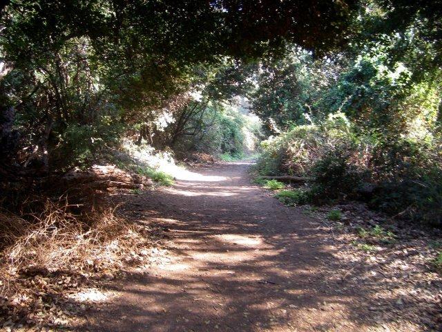 Dan Trail