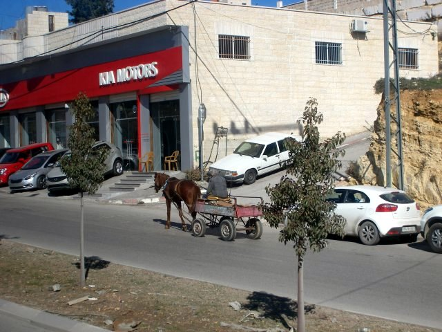 Horse as transportation