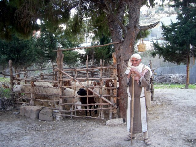 Shepherd and Sheep in Nazareth Village